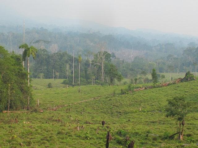 les hermanos ayant déboisé depuis 1975 la forêt primaire est bien bien loin