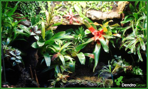 Exemple de terrarium tropical