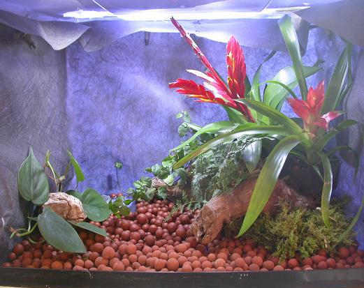 terrarium caisse plastique 2