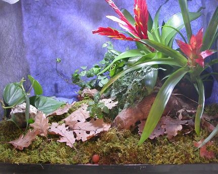 terrarium caisse plastique