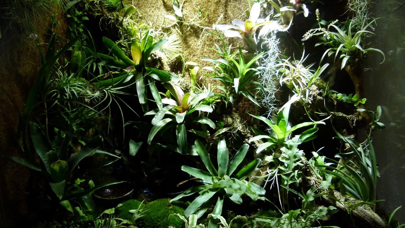 Exemple de terrarium 90x45x90 avec plusieurs espèces de Neoregelias d'incorporer à différentes hauteurs.